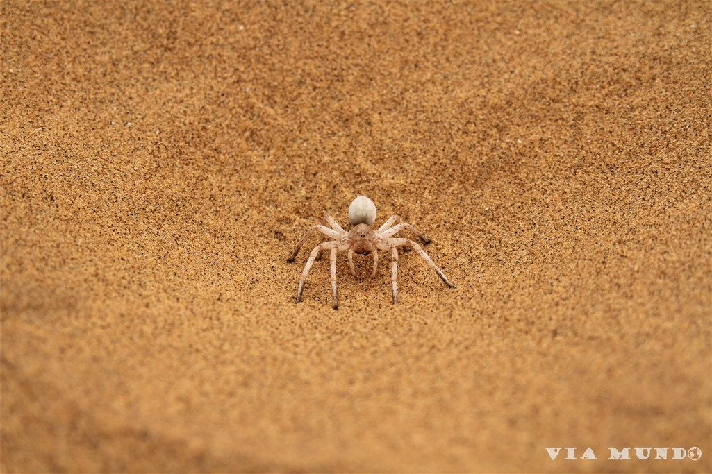 Dancing Lady Spider