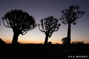 Quiver trees